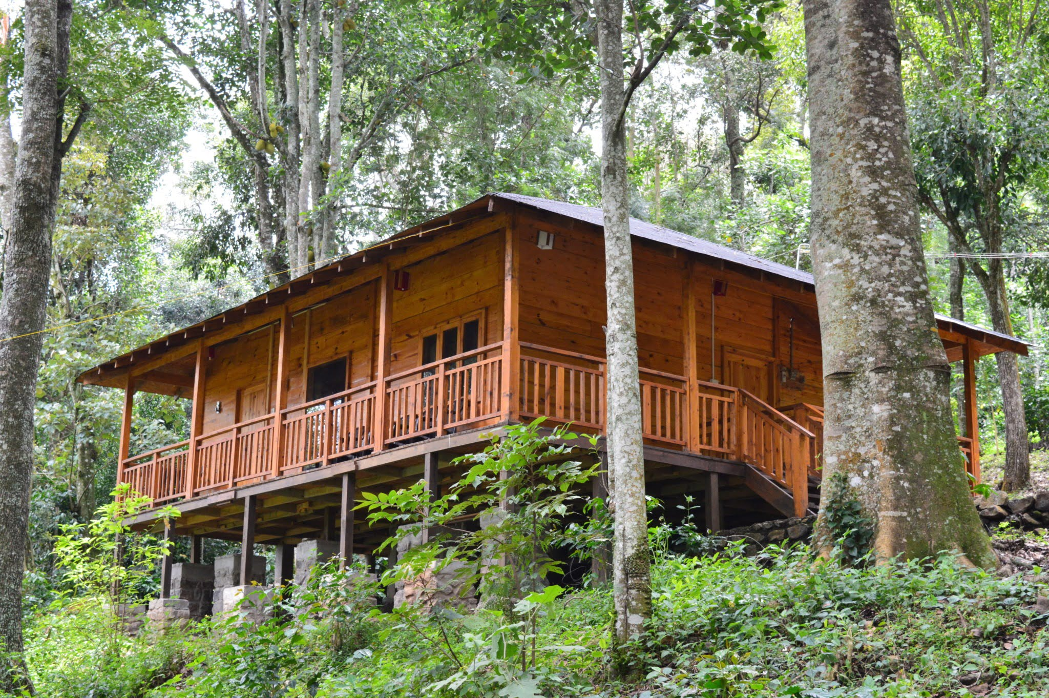 DELUXE WOOD HOUSE
